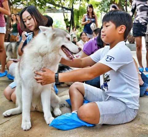 Best Bangkok Pet Cafes – Tea With Cute Animals In Thailand